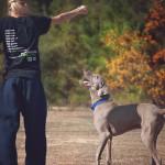 Les bases du dressage pour chiens