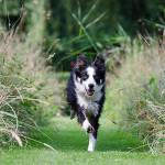 Faîtes venir votre chien… mais pour les bonnes raisons !