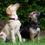 Les ordres de base : gardez le contrôle de votre chien