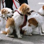 Promenez votre chien… sans que lui ne vous promène !
