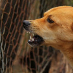 Bien réagir face à un chien agressif