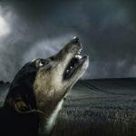 Comment s'occuper d'un chien qui a peur