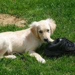 Modifier un comportement indésirable chez votre chien