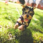 Apprendre à votre chien à ne pas sauter sur les gens