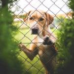 Laissez votre chien seul sans qu'il soit triste
